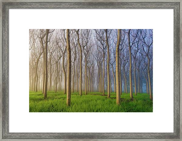 Morning Of The Forest Framed Print