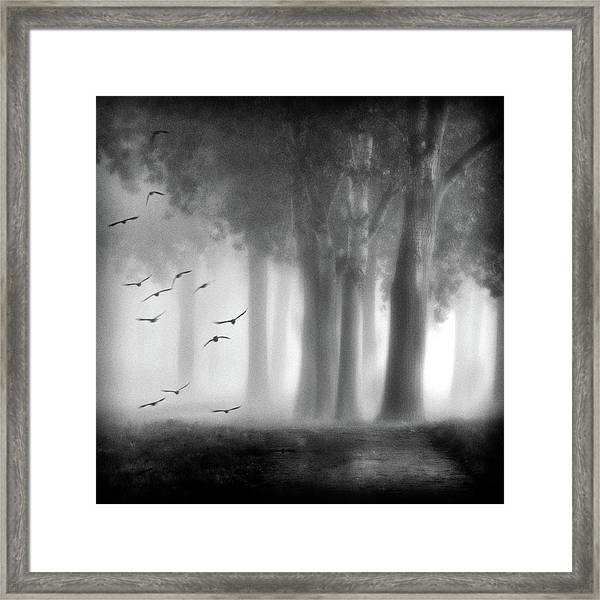 Morning Trees Framed Print