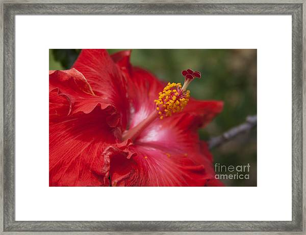 Morning Whispers Framed Print