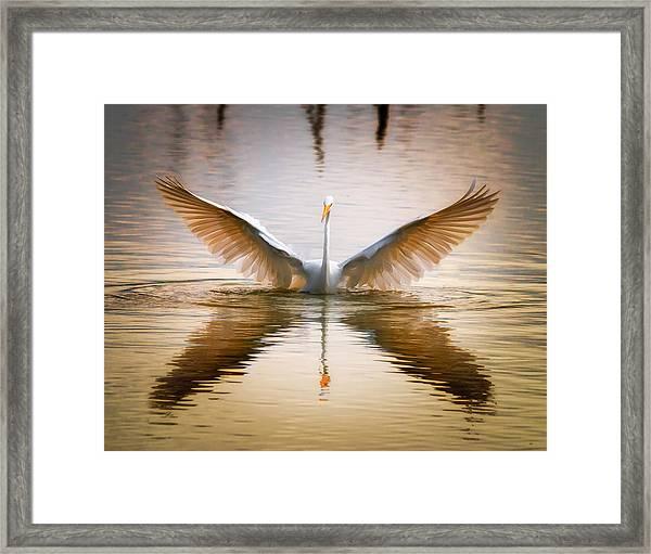 Morning Wings An Egret Awakes Framed Print