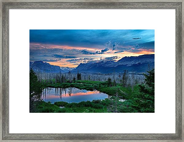 Mosquito Paradise Framed Print