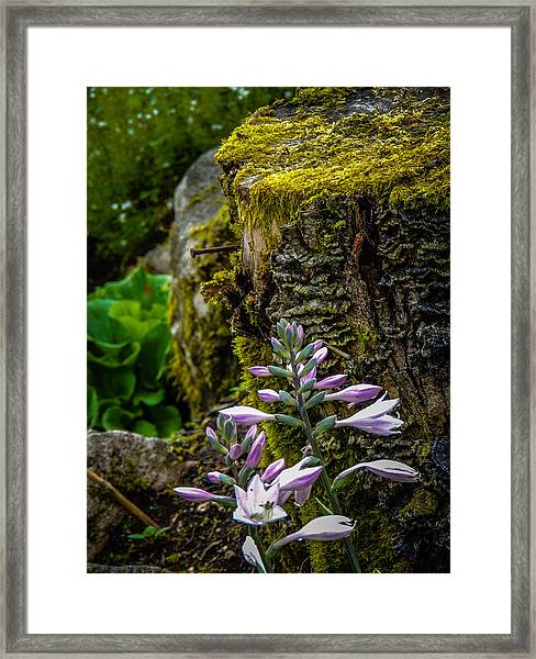 Moss And Flowers In Markree Castle Gardens Framed Print