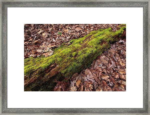 Moss On Pine Framed Print