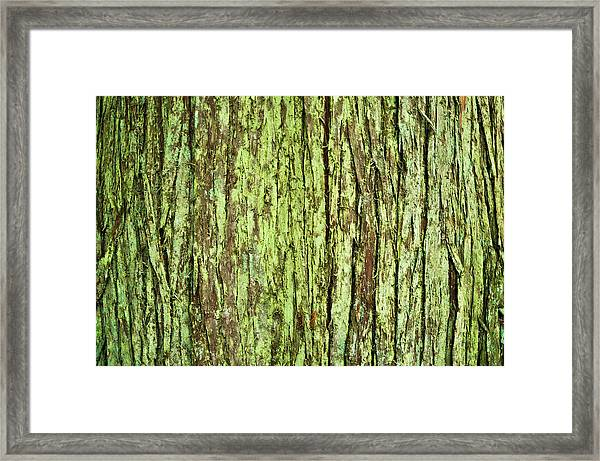 Moss On Tree Bark Framed Print