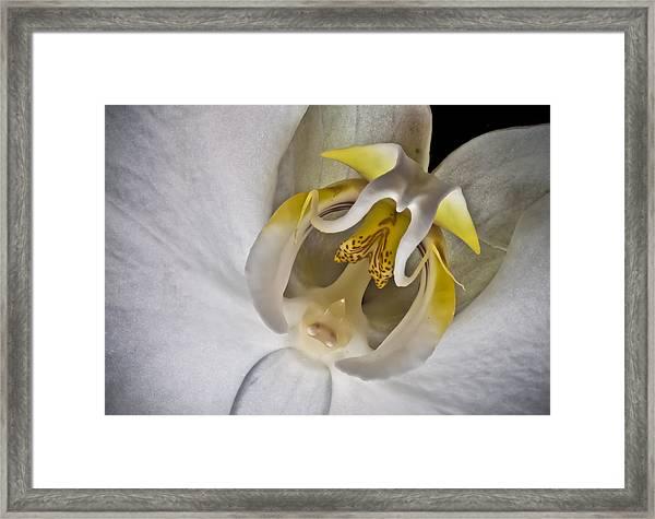 Moth Orchid Inverted Framed Print