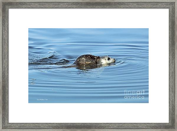 Mother Harbor Seal And Pup Framed Print