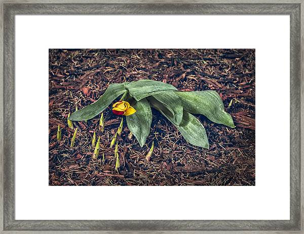 Mother Nurture Framed Print