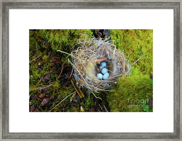 Mother Of Four Framed Print