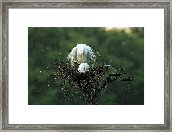 Motherly Love Framed Print by Libby Zhang
