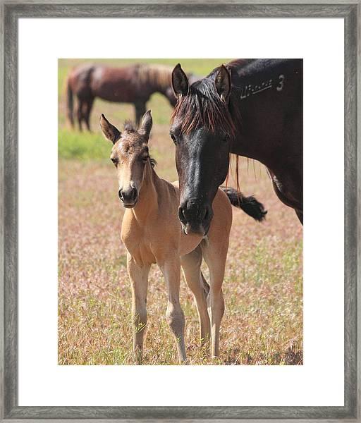 Mother's Love Framed Print by Gene Praag