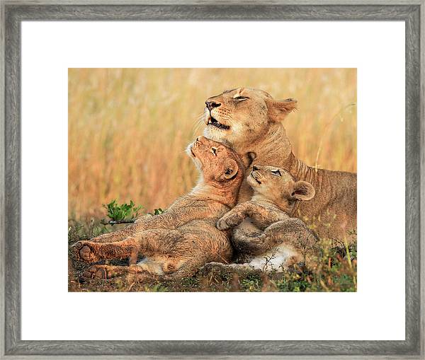 Mothers Love Framed Print by Jaco Marx
