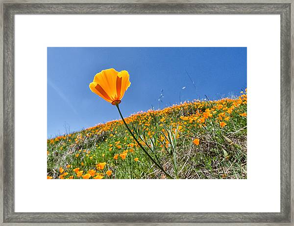 Framed Print featuring the photograph Mount Diablo Poppy Field by Robert Rus