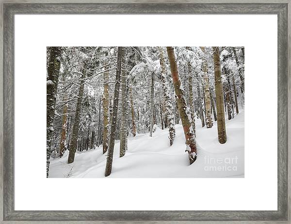 Mount Jim - Kinsman Notch New Hampshire Usa  Framed Print