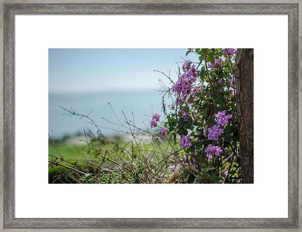Mount Of Beatitudes Framed Print