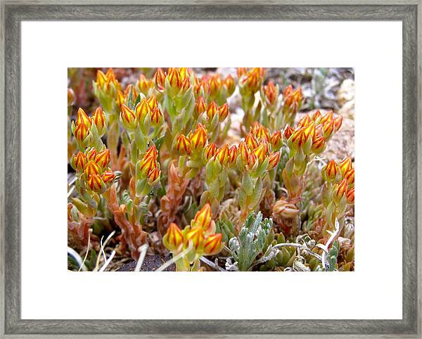 Mountain Blaze Framed Print