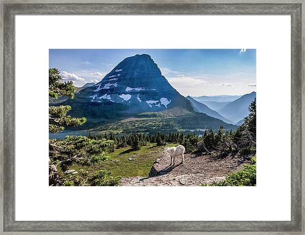 Mountain Goat In Front Of Bearhat Framed Print