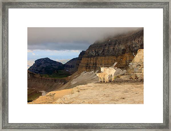 Mountain Goats On Timpanogos Framed Print