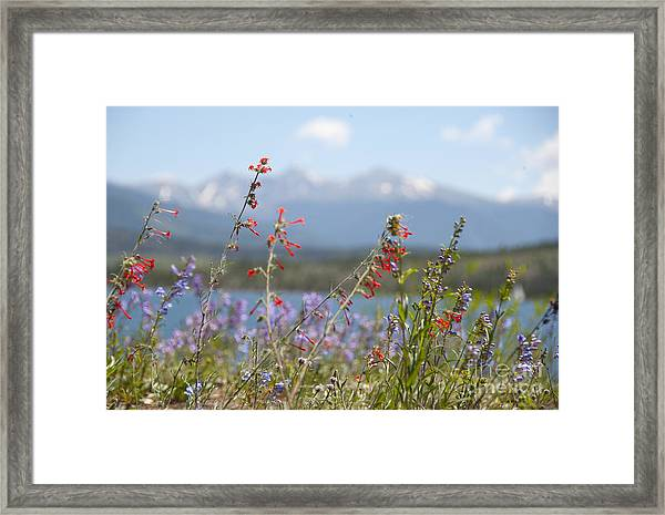 Mountain Wildflowers Framed Print