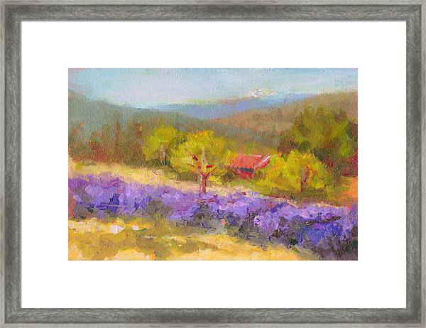 Mountainside Lavender   Framed Print