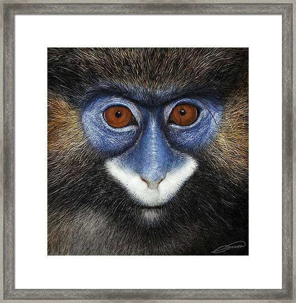 Moustached Guenon 2 Framed Print by Owen Bell