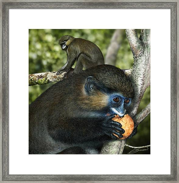 Moustached Guenon Framed Print by Owen Bell