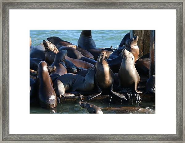 Move Over Framed Print