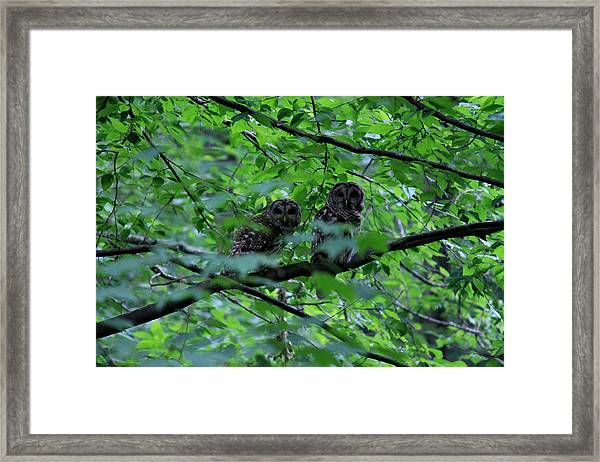 Mr And Mrs Owl Framed Print