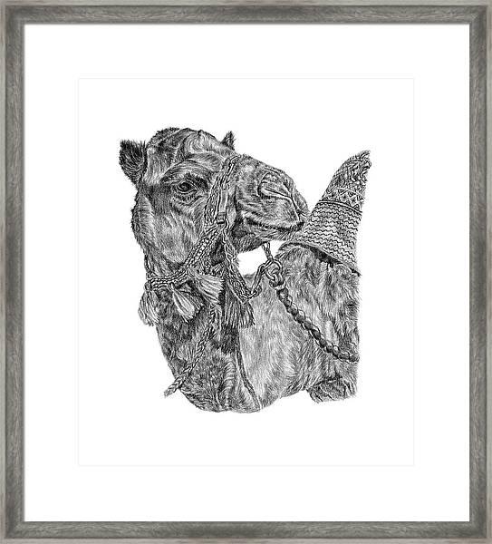 Mr Camel Framed Print