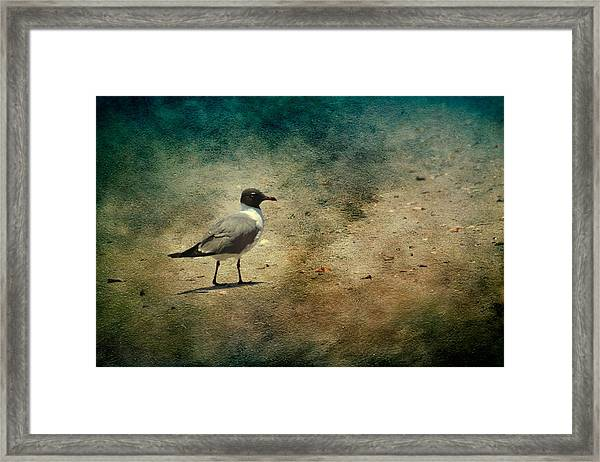 Mr. Seagull Framed Print