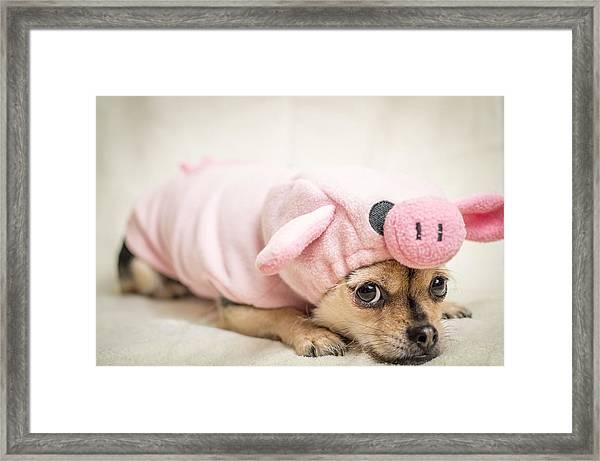 Ms Piggy Framed Print