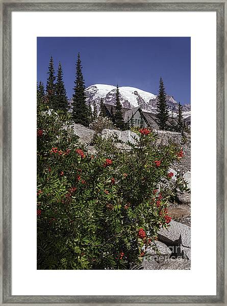 Mt Ash At Mt Rainier Framed Print