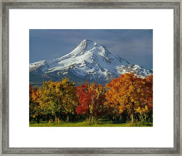 1m5117-mt. Hood In Autumn Framed Print