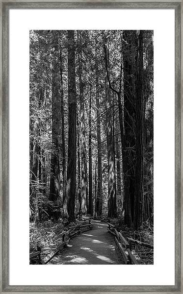 Muir Woods Giants Framed Print