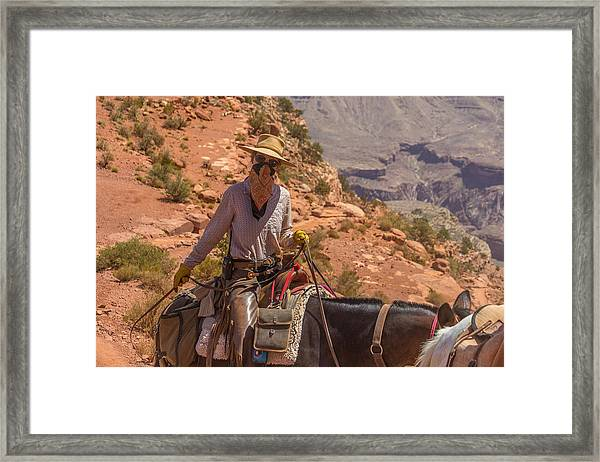 Mule Wrangler On The South Kaibab Trail Framed Print