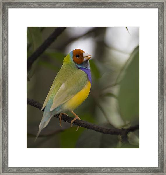 Multicolored Beauty Framed Print