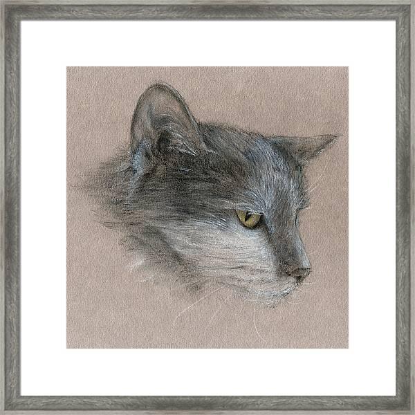 Murray The Cat Framed Print