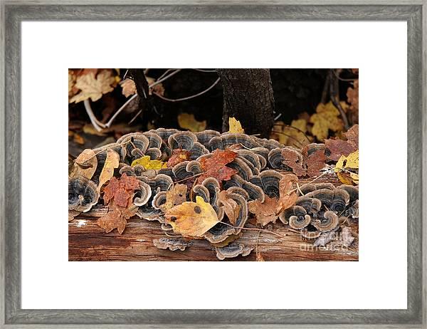 Mushroom Log Framed Print