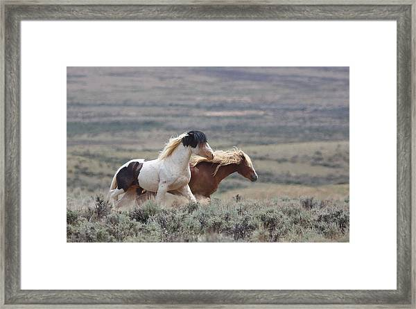 Mustangs On The Move Framed Print