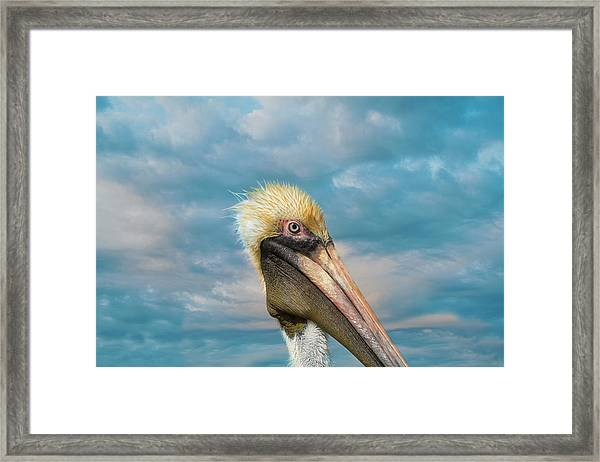 My Better Side - Florida Brown Pelican Framed Print