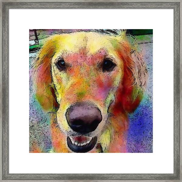 My Friends Dog #portrait #dogportrait Framed Print