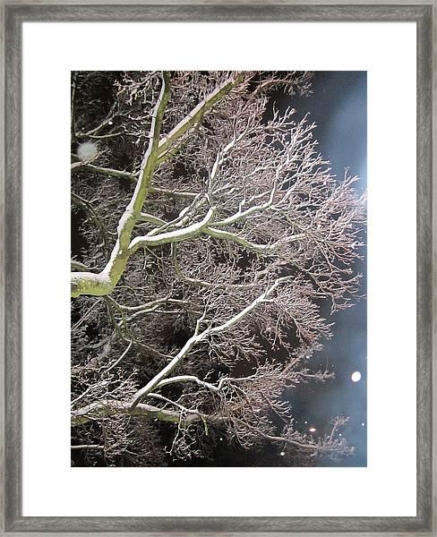 My Magic Tree Framed Print