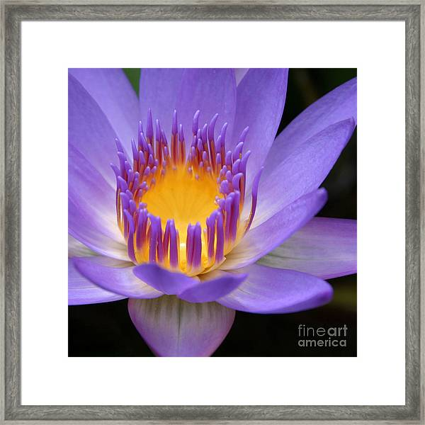 My Soul Dressed In Silence Framed Print