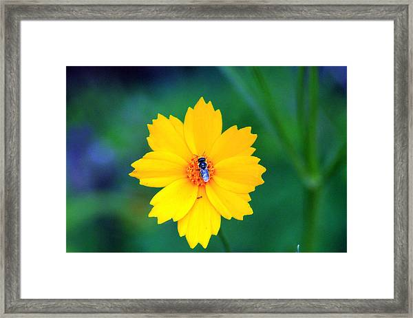 My Yellow World Framed Print