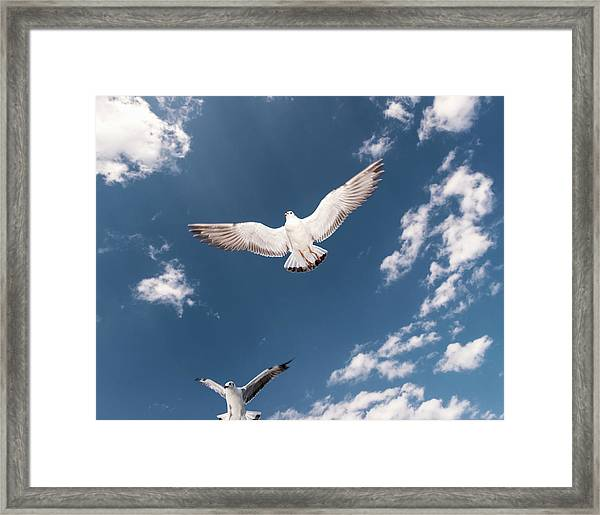 Myanmar, Inle Lake, Seagulls Inflight Framed Print by Martin Puddy