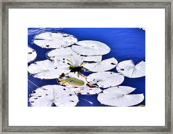 Mylily Framed Print