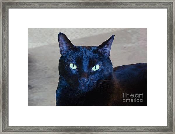 Mysterious Black Cat Framed Print