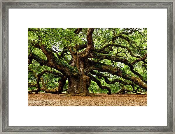 Mystical Angel Oak Tree Framed Print