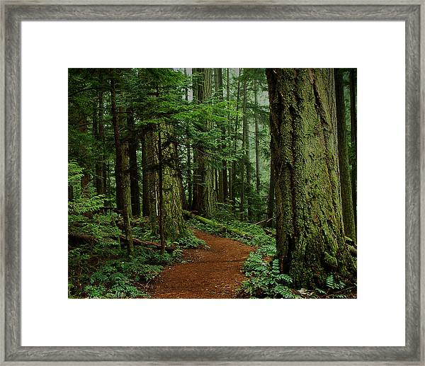 Framed Print featuring the photograph Mystical Path by Randy Hall
