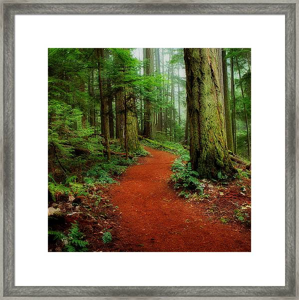 Framed Print featuring the photograph Mystical Trail by Randy Hall