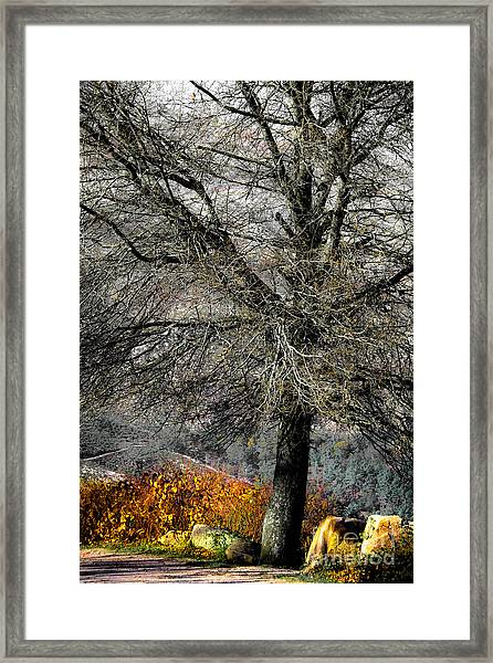 Naked For The Winter Framed Print